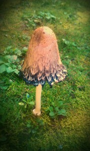The magic mushroom
